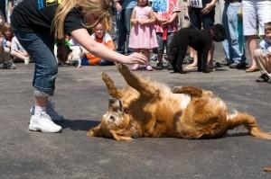 SRBA - Pet Parade - 2008 - 0805170299 G.sized